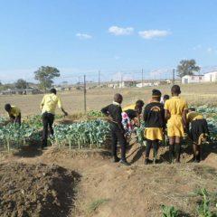 Nutrition et agriculture durable